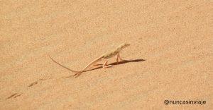 lagarto en el desierto