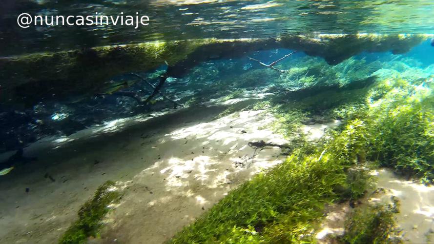 Peces bajo la vegetación en el río Olho d'Água, en el Recanto ecológico Rio da Prata