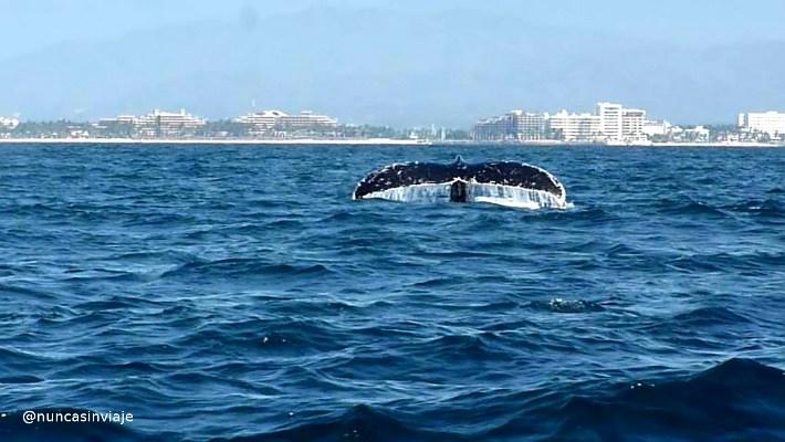 ballena yubarta 2