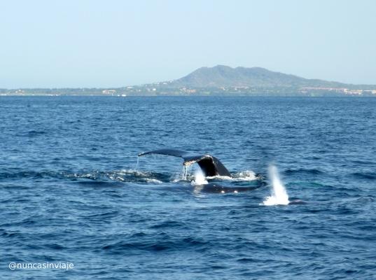 ballenas yubartas 1