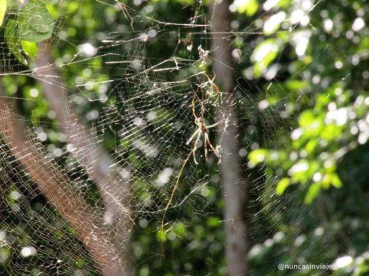 Araña en México