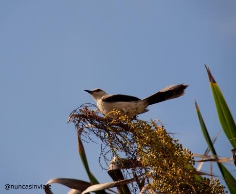 pájaro en las ruinas de Tulum
