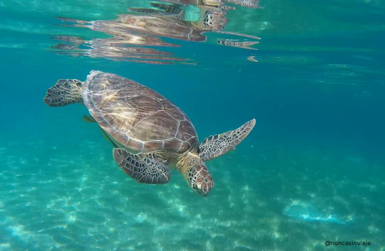 Una tortuga verde y su reflejo en la superficie del agua