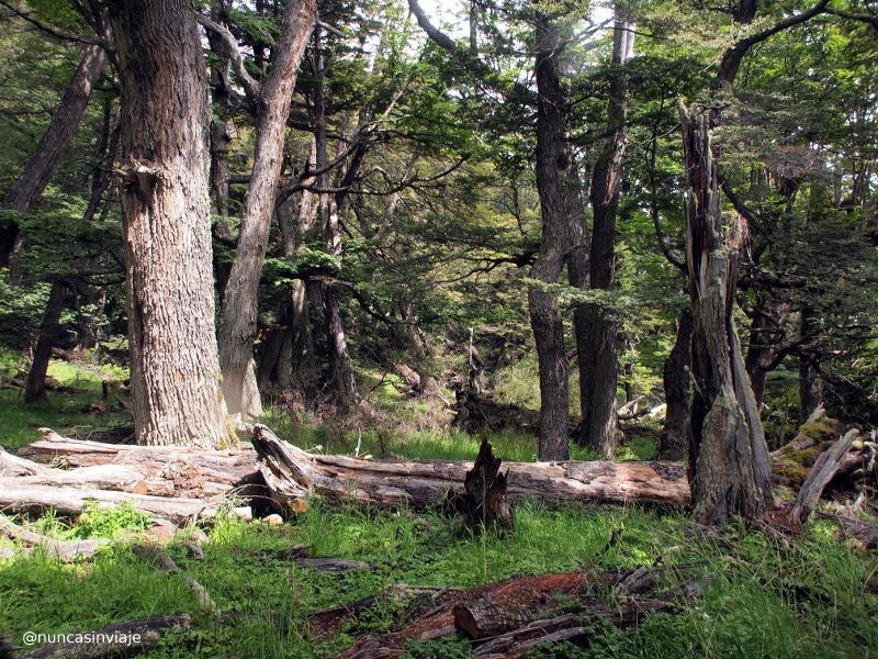bosque junto al glaciar