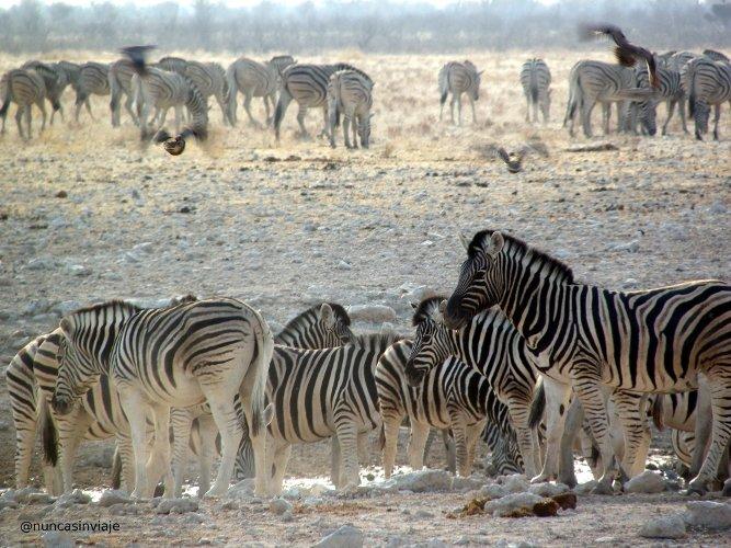 Animales de Namibia concentrados junto a una charca