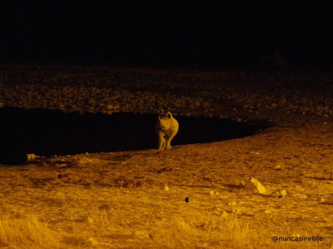 Charca en Etosha durante la noche