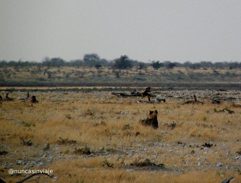 Una hiena en la distancia