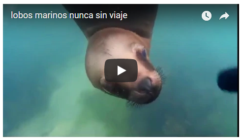 Vídeo sobre lobos marinos
