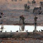 Animales bebiendo en una charca en Etosha