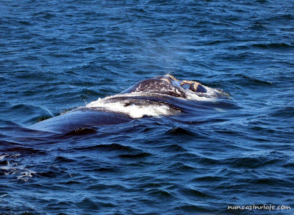Las ballenas son el principal atractivo de Puerto Madryn