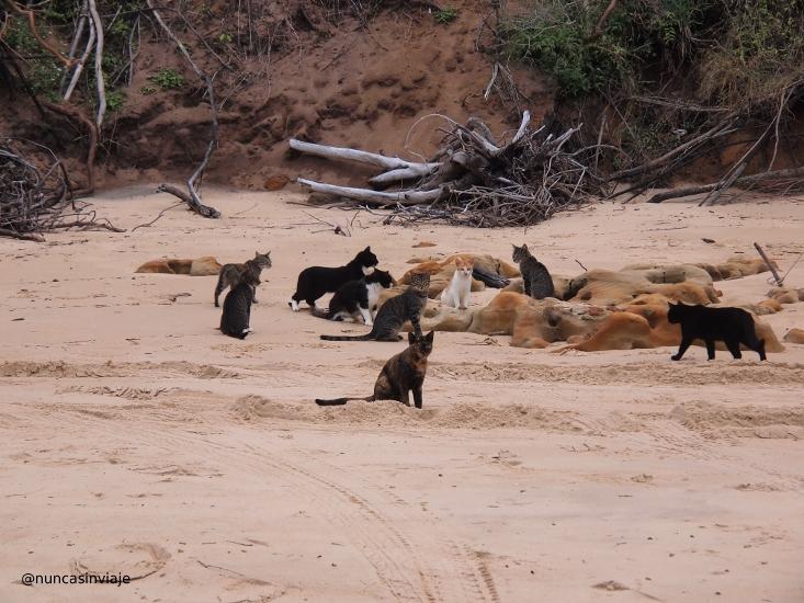 Playa de los gatos en Natal