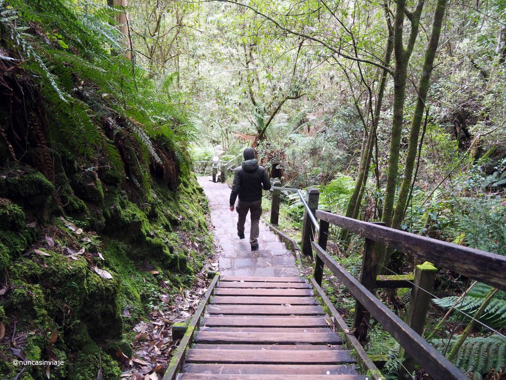 Descenso a Erskine Falls