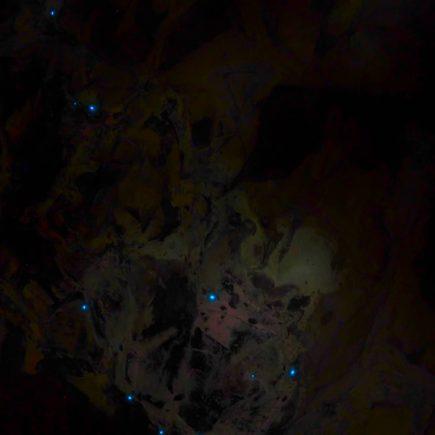 gusanos luminosos