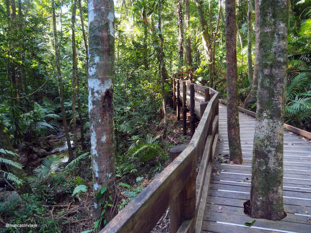 Jindalba Boardwalk en el bosque de Daintree
