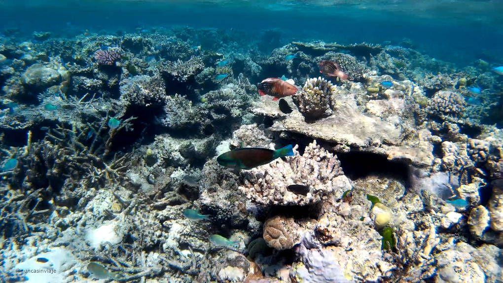 Peces en la Gran Barrera de Coral