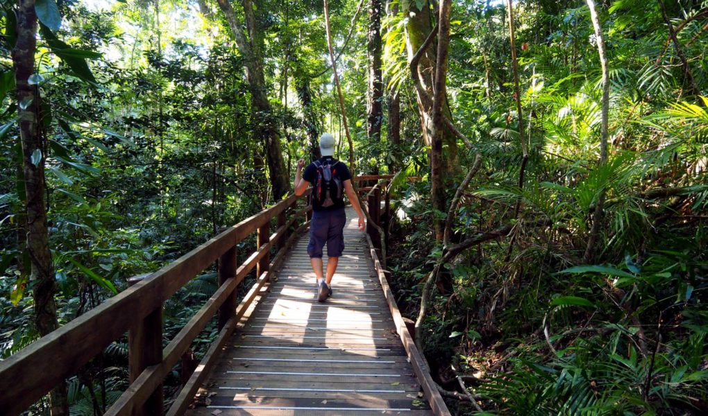 bosque de daintree