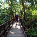 bosque de daintree