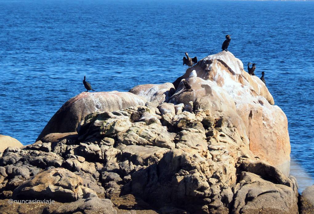 Cormoranes en Sálvora tomando el sol