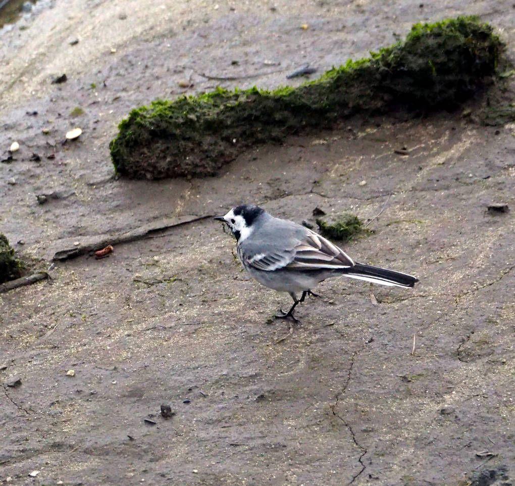 Excursiones desde Vigo: avistamiento de Aves