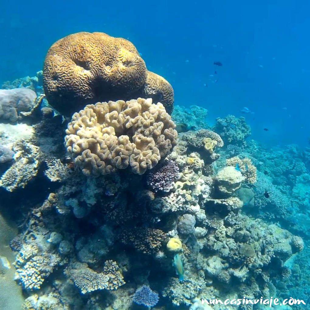 Corales en Port Douglas