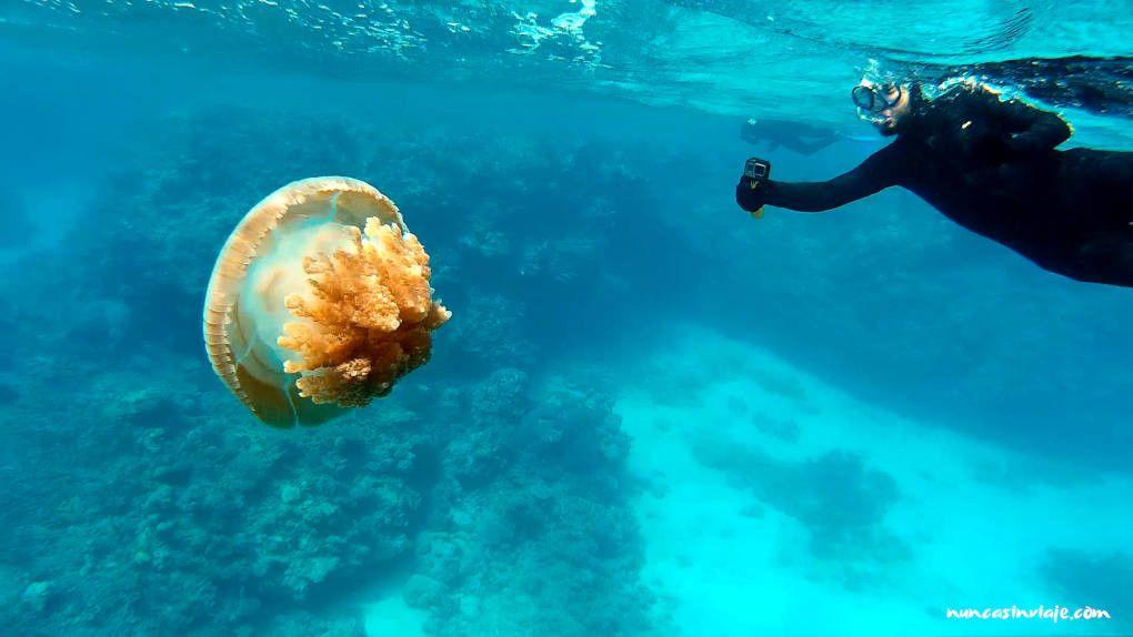Snorkel responsable en la Gran Barrera de Coral