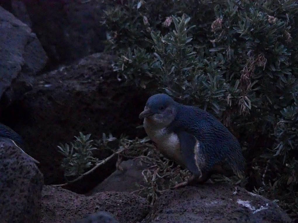 Pingüino sobre las rocas
