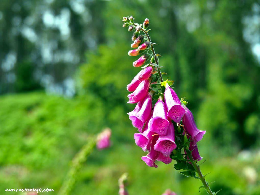 Flor digital
