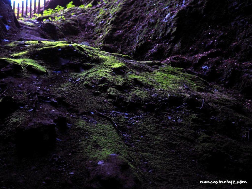 Musgo luminiscente en Cova das Choias
