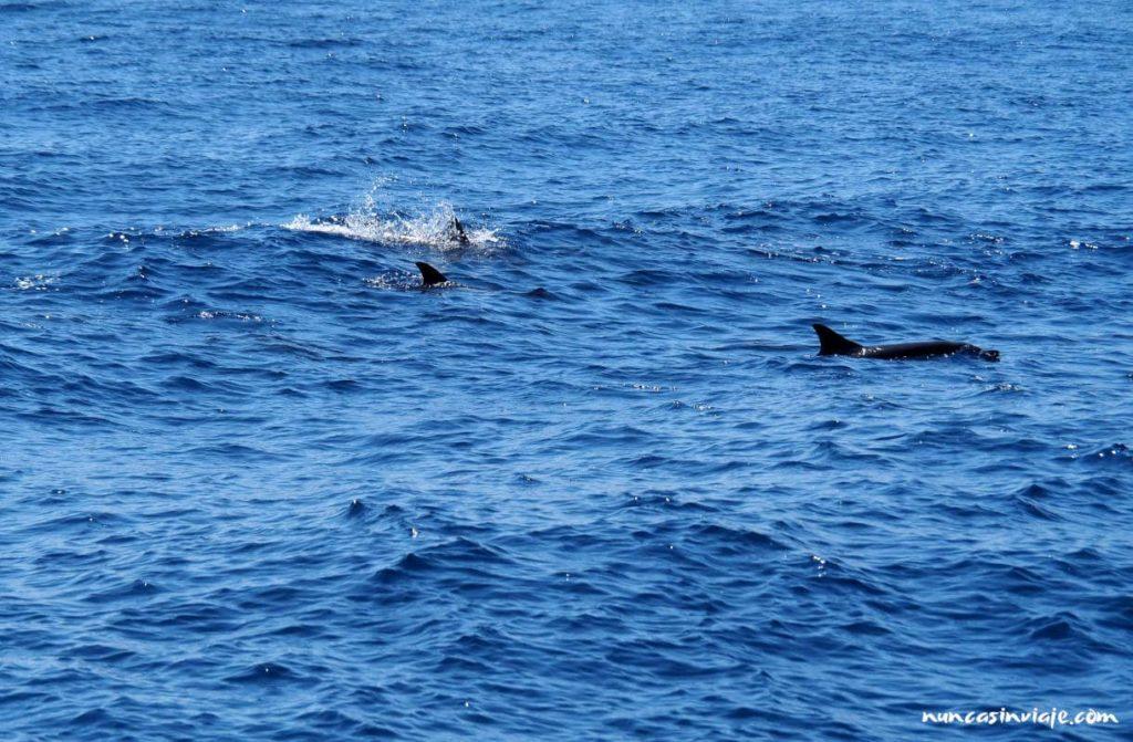 Grupo de Delfines Comunes