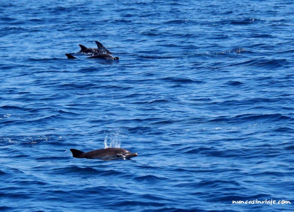 Grupo de delfines comunes en Tarifa