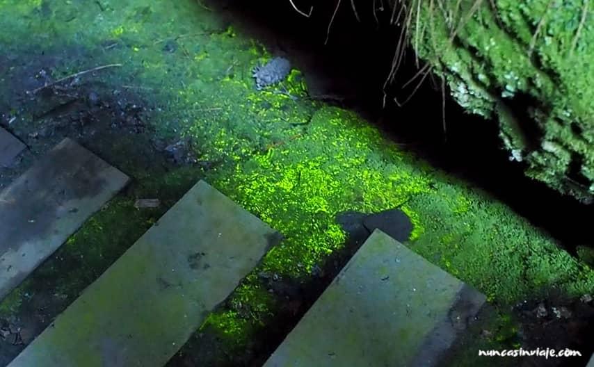Musgo luminiscente en A Cova das Choias