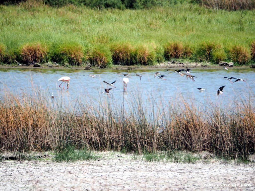Aves en una charca de Doñana