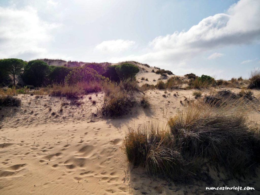 Sistema de dunas y corrales de Doñana