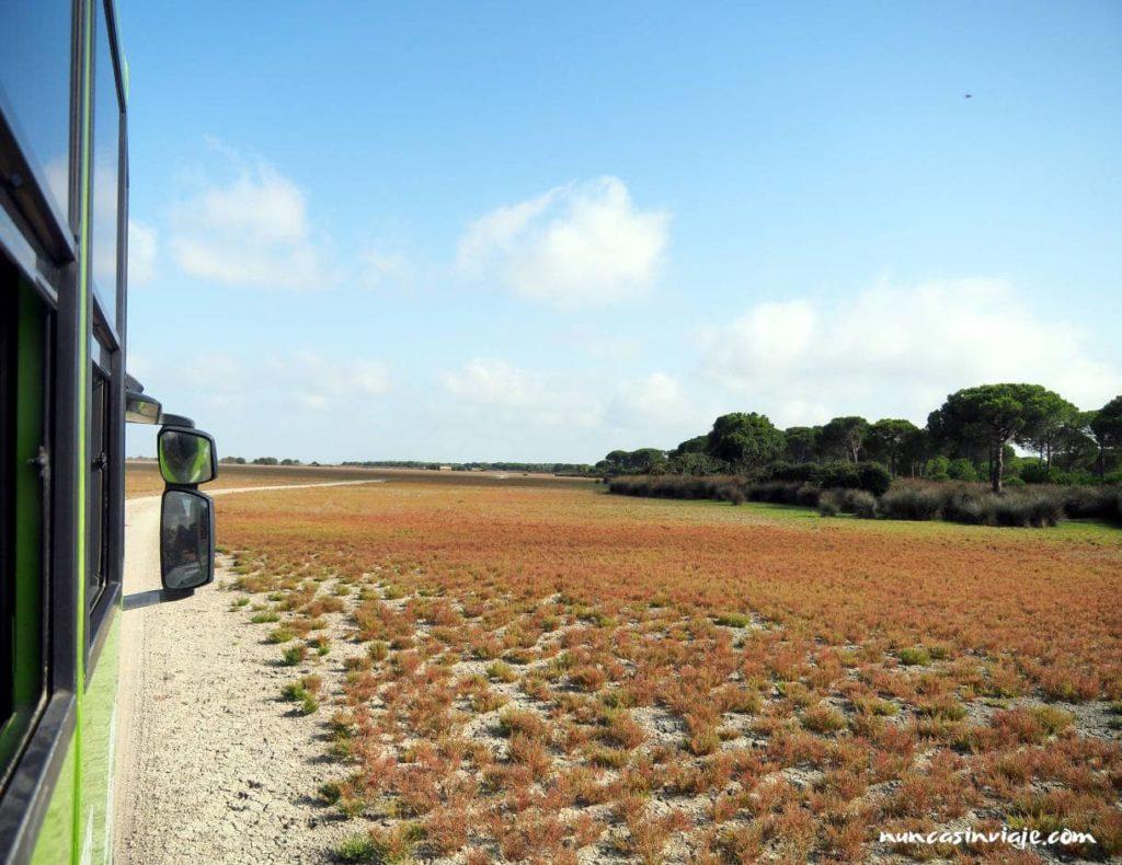 Excursión en todoterreno por Doñana