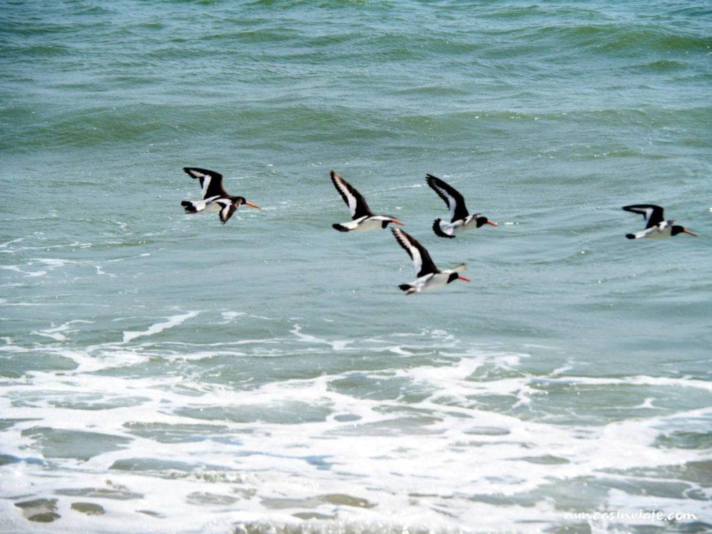 Aves del parque de Doñana