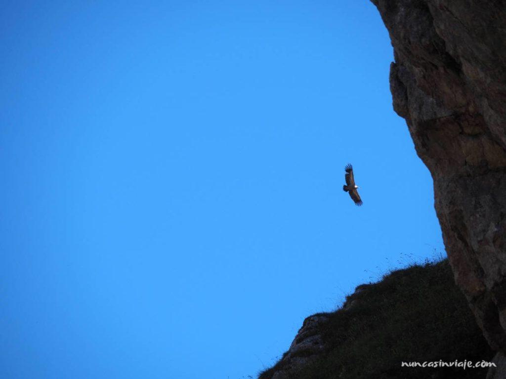 Un buitre leonado sobrevuela los picos de la ruta