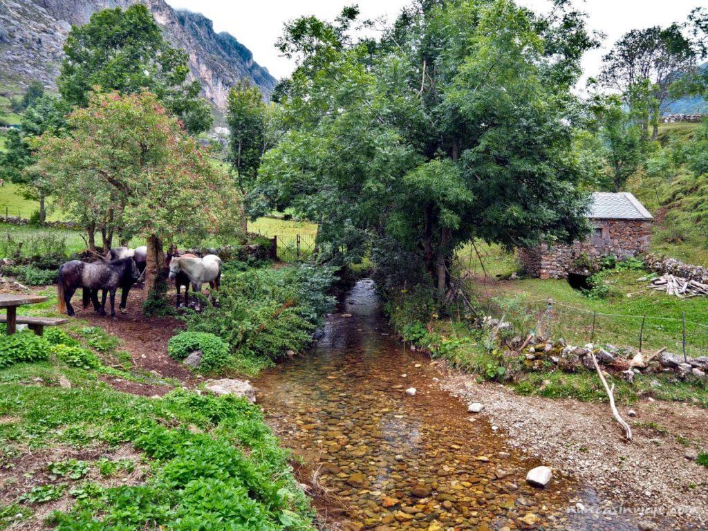 Tramo inicial de la ruta de la braña de Sousas, junto al río del Valle