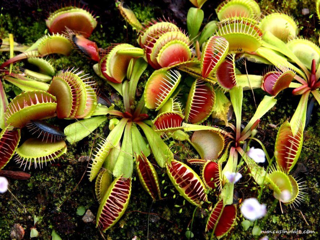 Plantas carnívoras en el jardín botánico de Gotemburgo