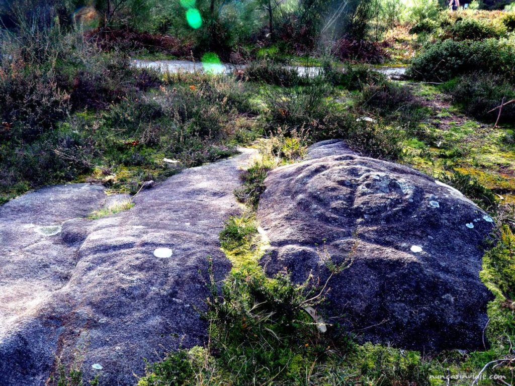 Petroglifos de Pontevedra