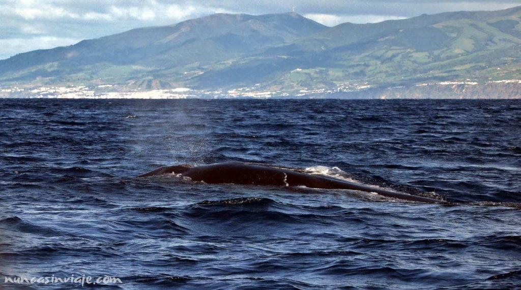 Ver ballenas en Sao Miguel