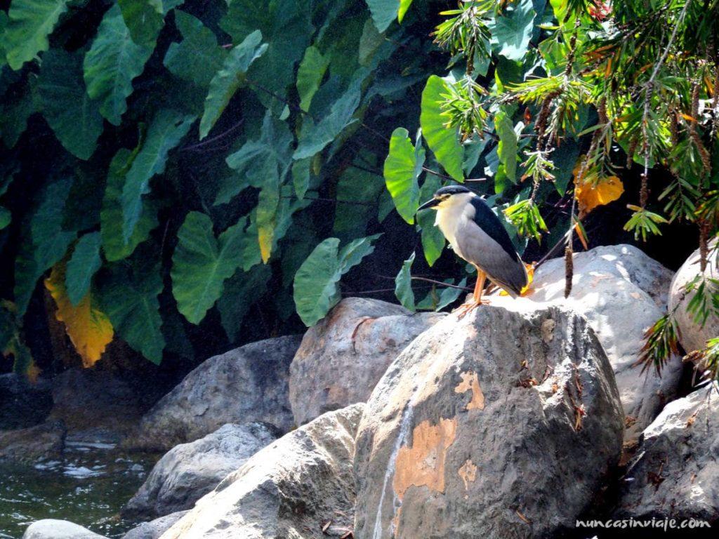 Un ave en el parque Doramas de Las Palmas