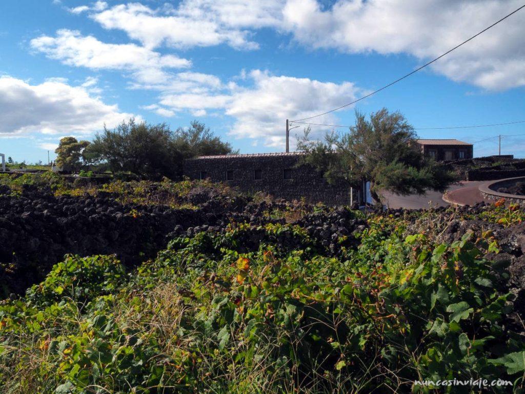 Qué ver en Terceira: las viñas de Biscoitos