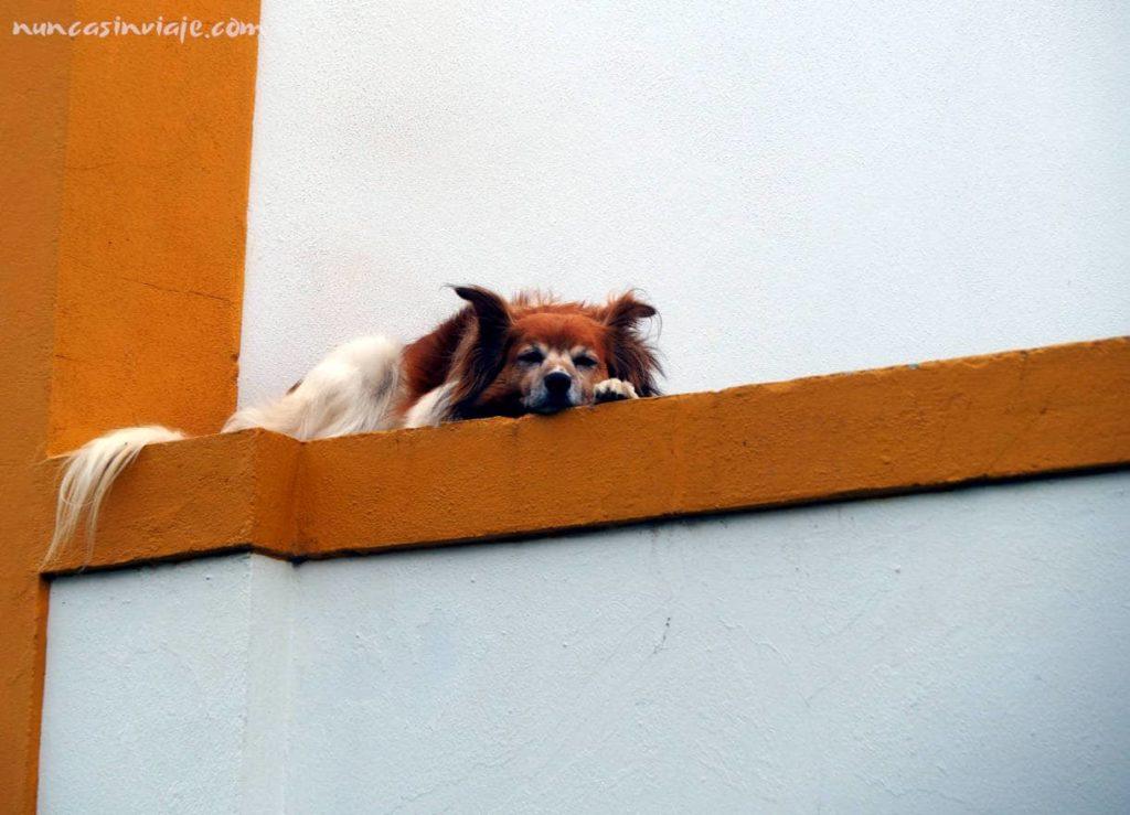 Un perro descansa en un pueblo en Terceira